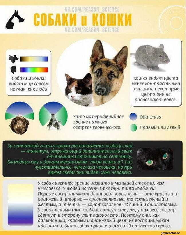 Как видят кошки: ? особенности зрения кошачьих
