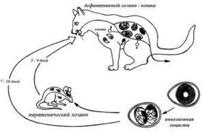 Как понять, что кошке скоро пора рожать