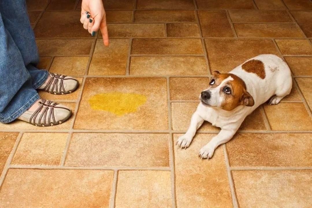 Почему у собаки пахнет изо рта тухлятиной