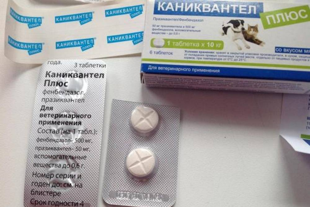 Каниквантел для собак: инструкция по применению, состав лекарства и побочные эффекты