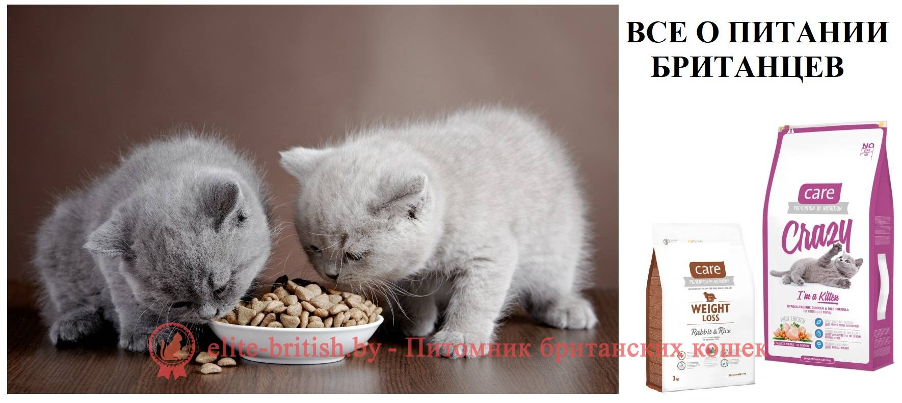 Как кормить новорожденного котенка без кошки?