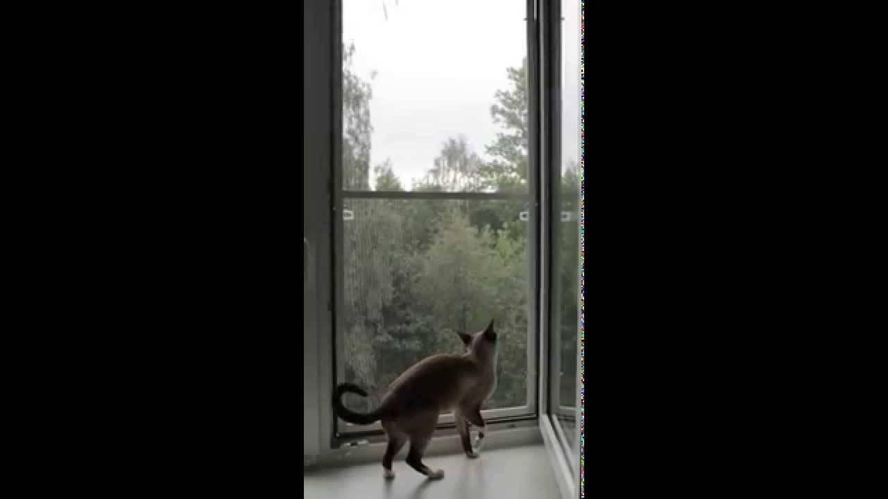 Почему коты падают из окна