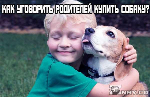 Как уговорить родителей купить собаку: полезные советы