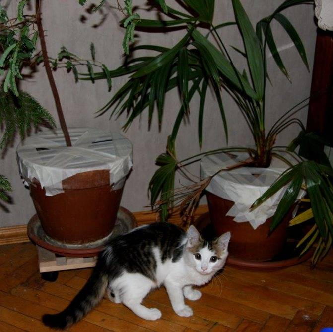 Как отучить кота есть комнатные растения: способы