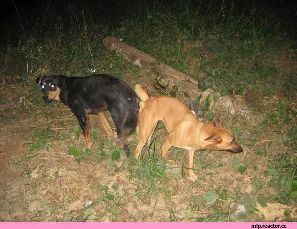 Могут ли люди слипнуться как собаки?