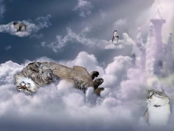 Как пережить смерть кошки