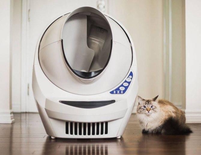 Причины игнорирования лотка кошкой, советы по повторному приучению