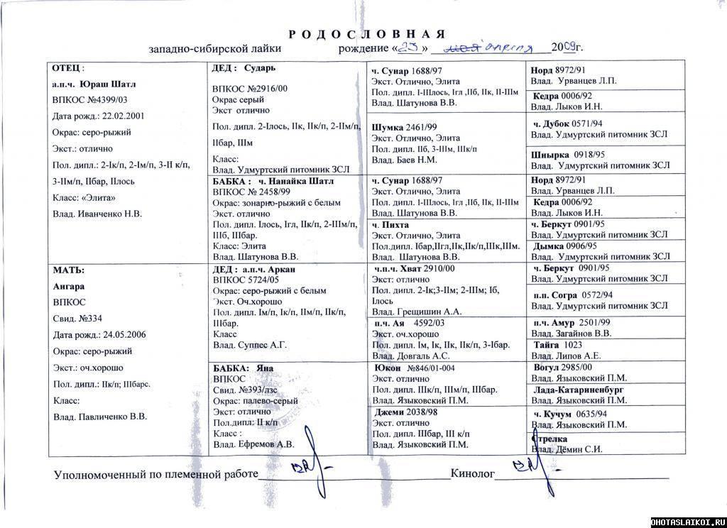 Западно-сибирская лайка: описание породы и характер