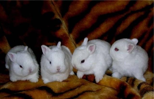 Имена для кроликов: какое дать и как к нему приучить?