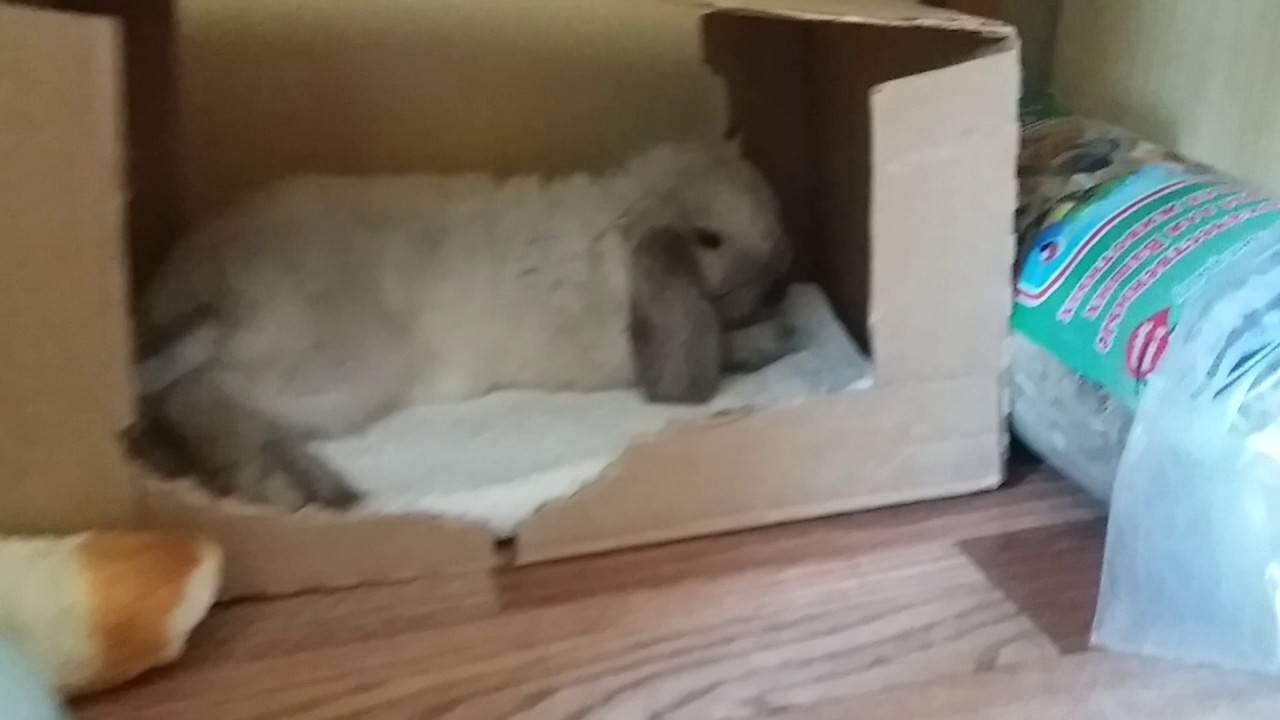 Когда спят кролики. правда ли, что кролик спит с открытыми глазами
