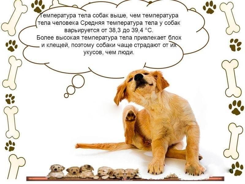 Какая температура у собаки считается нормальной - основные причины отклонения от нормы