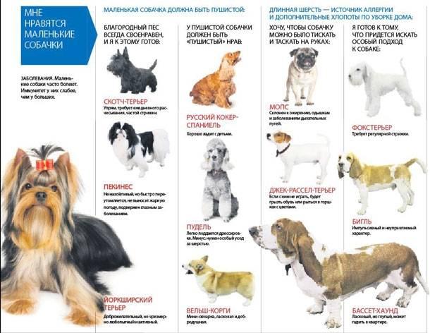 Породы собак маленьких размеров с фото, названиями и особенностями характера | знать про все