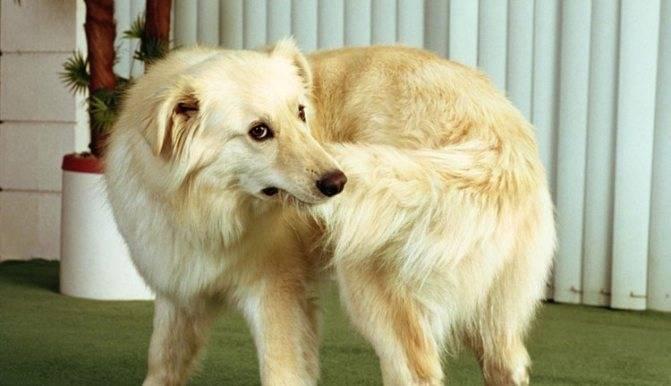 Собака грызет спину возле хвоста - что провоцирует данный симптом?