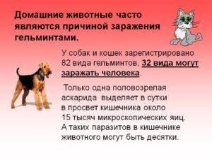 Передаются ли глисты от собак к людям: советы и рекомендации