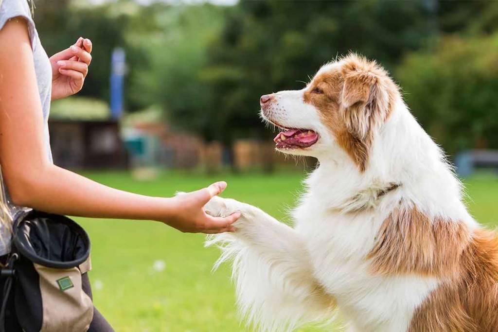 Как познакомить взрослую собаку с новым щенком?