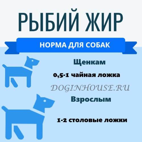 Можно ли собакам рыбу: соленую, сырую и вареную, особенности кормления речной и морской рыбой