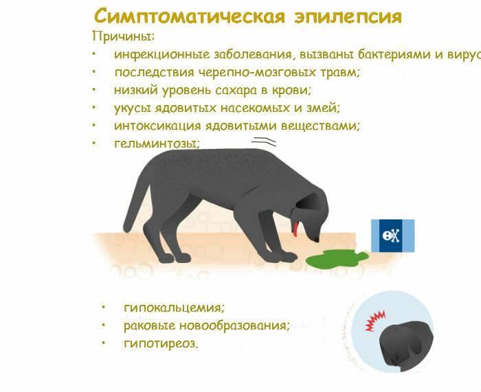 Эпилепсия у кошек лечение как прекратить приступы - муркин дом