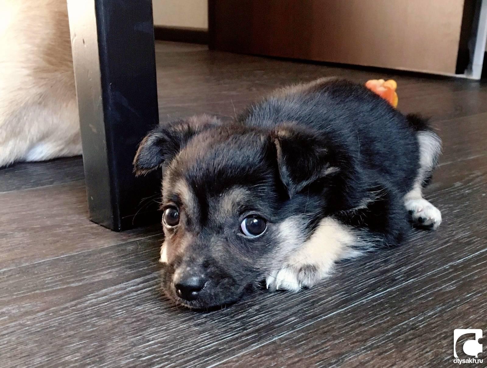 Клички для собак - список 3000 лучших кличек для собак-мальчиков и собак-девочек