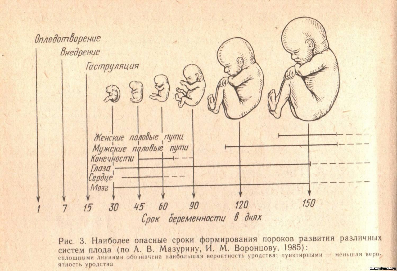 Беременность у кошек по неделям: сколько длится и как протекает у питомицы
