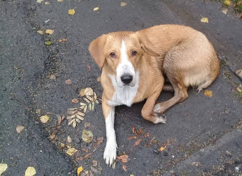 Рекомендации о том как легко и быстро найти потерянную собаку, которая сбежала