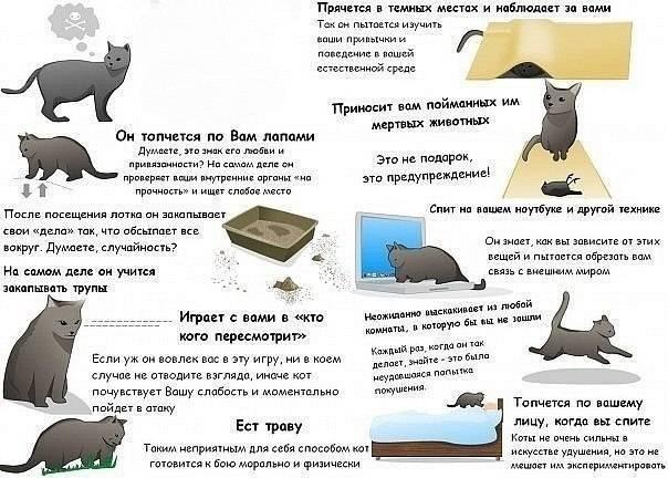 Почему кошки топчутся лапками и мурчат?