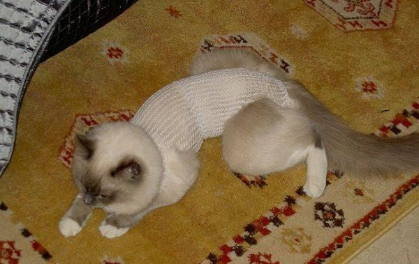 Когда можно снять попону с кошки после стерилизации
