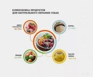 Чем кормить той-терьера: правильный натуральный рацион и готовые корма