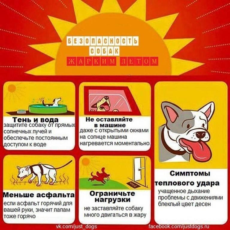 Как помочь собаке пережить жару