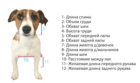 Размеры одежды для собак с учетом породы животного, выбор обуви