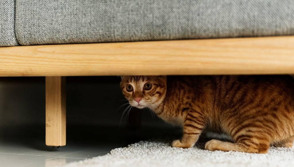 Что делать, если кошка странно себя ведет?
