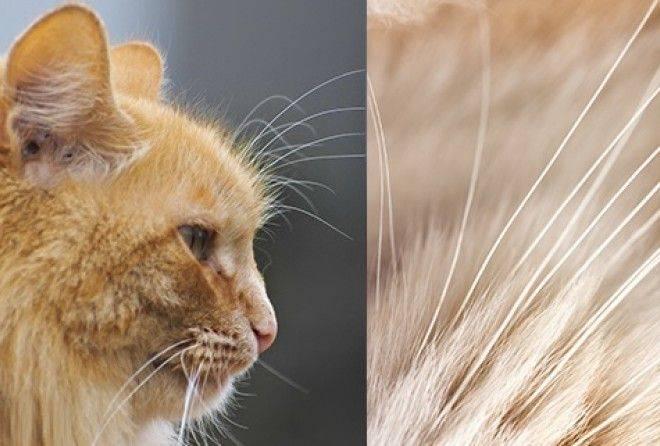 Отрастут ли у кота усы если обрезать ⋆ онлайн-журнал для женщин