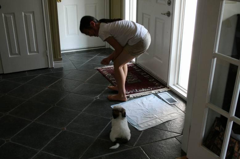 Как приучить собаку к туалету на улице   как отучить ходить в туалет дома
