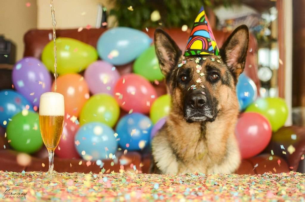 Какого числа день собак в россии