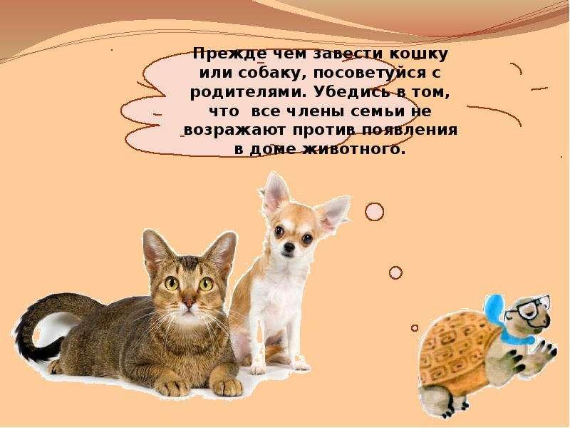 10 причин завести дома котенка: почему люди заводят котов и кошек, в чем их плюсы и минусы?