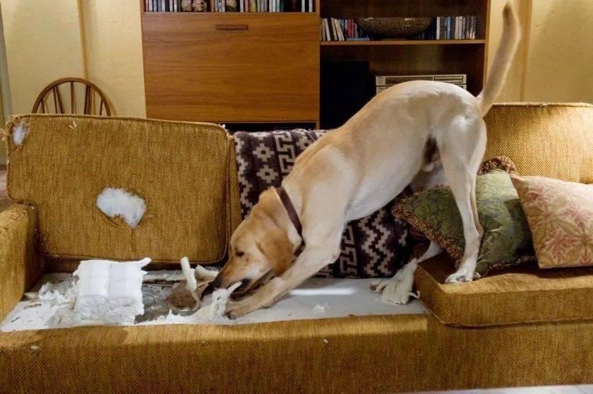 Беспокойное поведение собаки — причины и методы устранения