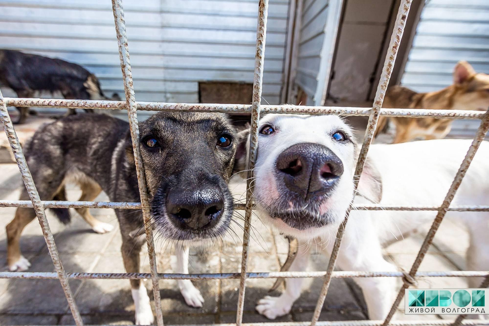 Приюты для собак и кошек - контакты