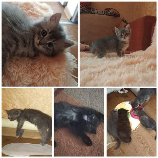 5 вариантов куда пристроить котят от обычной кошки