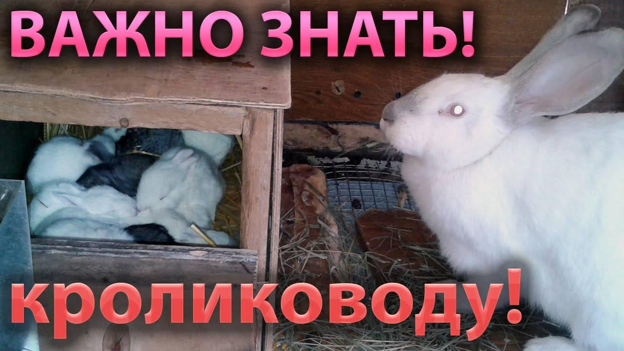 Почему дохнут кролики летом: что делать и от чего умирают без видимых причин?