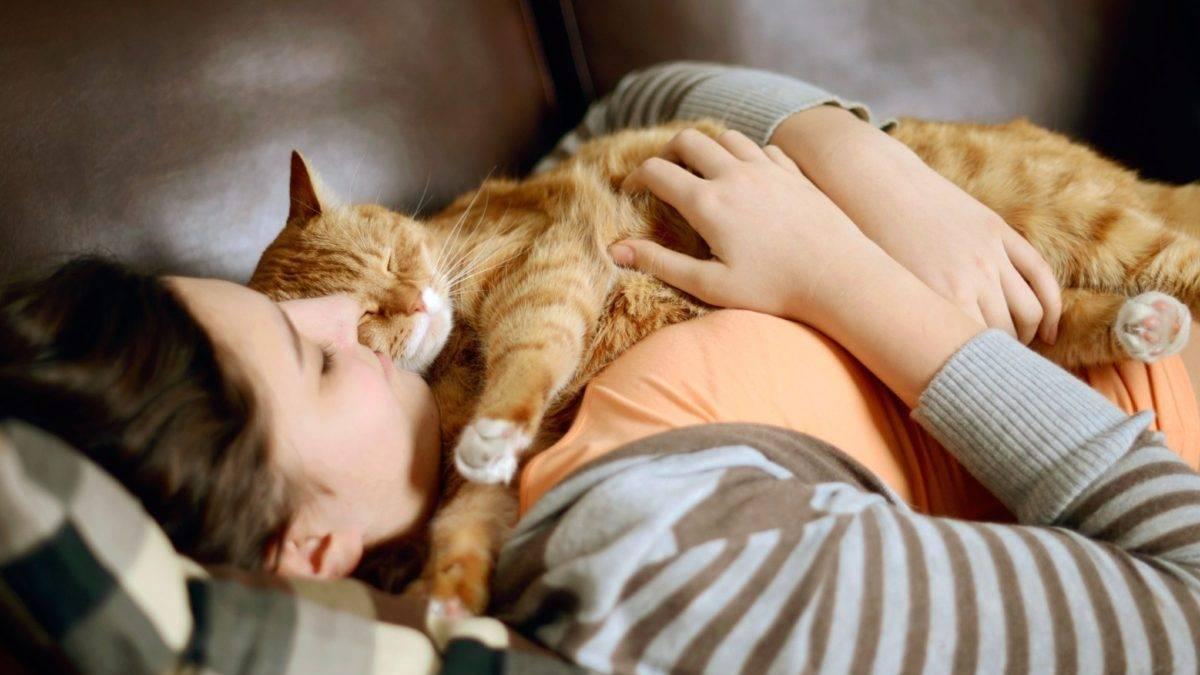 Почему коты любят лежать и спать на спине: перед хозяином или раскинув лапы
