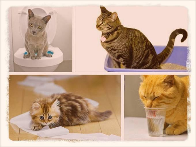 Понос у котенка: причины возникновения и лечение
