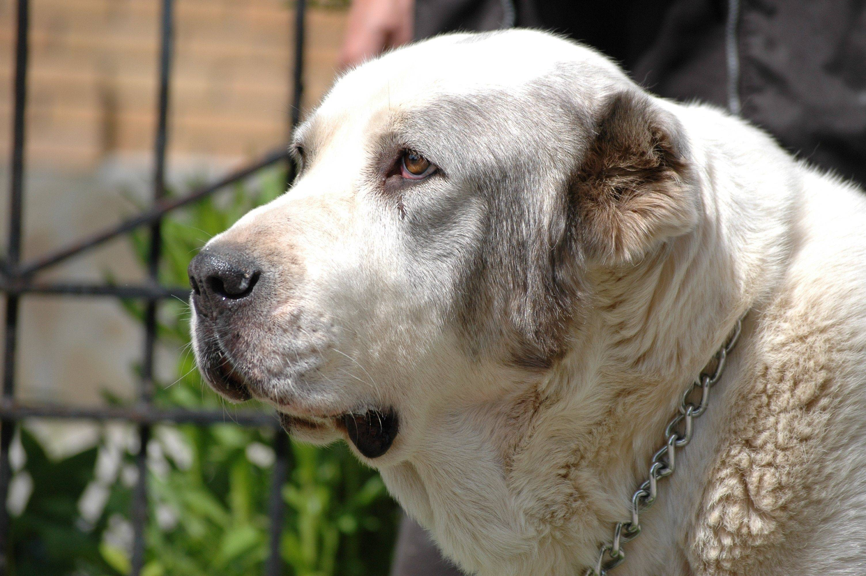 Выбор хорошей собаки в частный дом: какую завести породу