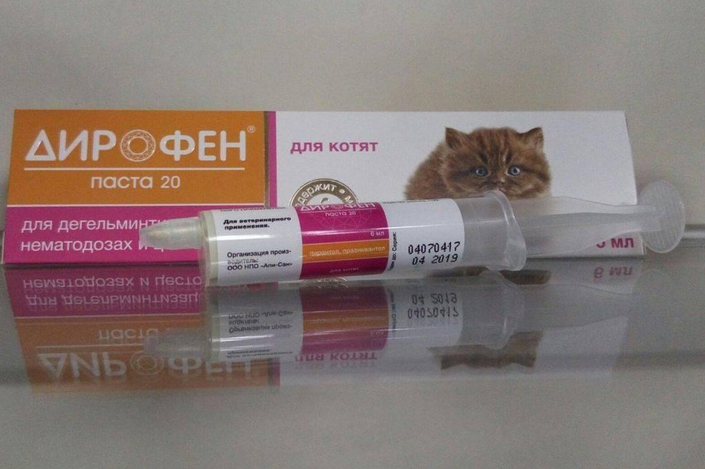 «дирофен» для кошек: инструкция по применению