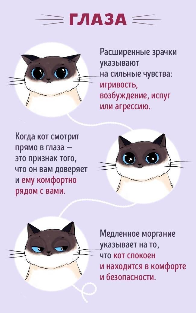 Кошачий язык: как понять кошку, краткий словарь переводчик, как ответить