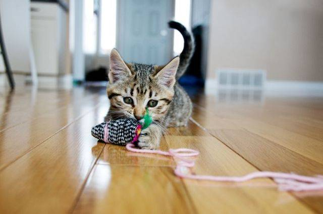 Кошка грызет провода, как отучить? советы экспертов на сайте petstory