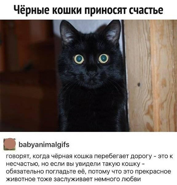 Кошка в доме: какую энергетику приносит, почему нельзя убивать, какого цвета лучше завести