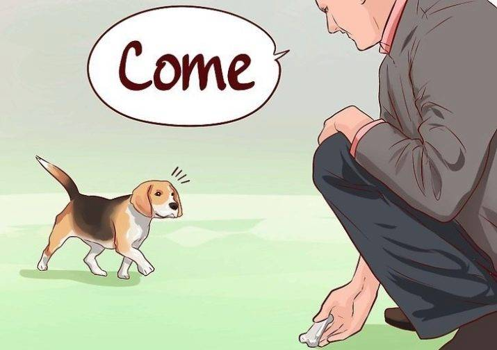 Дрессировка собаки самостоятельно: курс послушания
