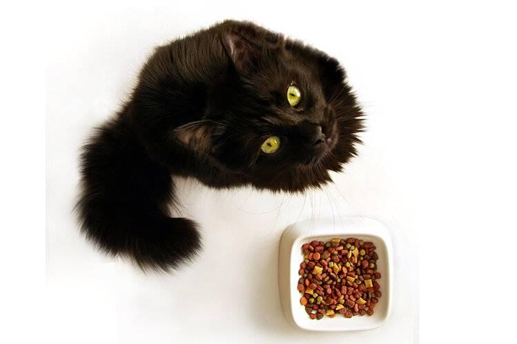 Почему кошка закапывает миску