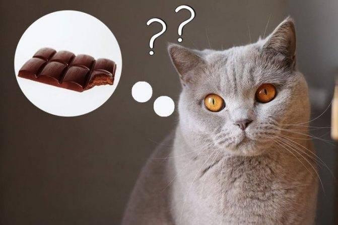 Кошки не чувствуют сладкого: почему?