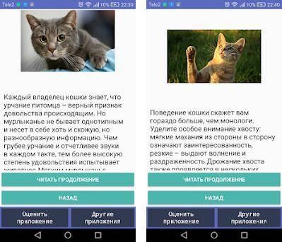 Как понять язык кошки?