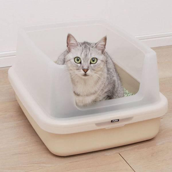 Приучить кошку к лотку — задача выполнимая